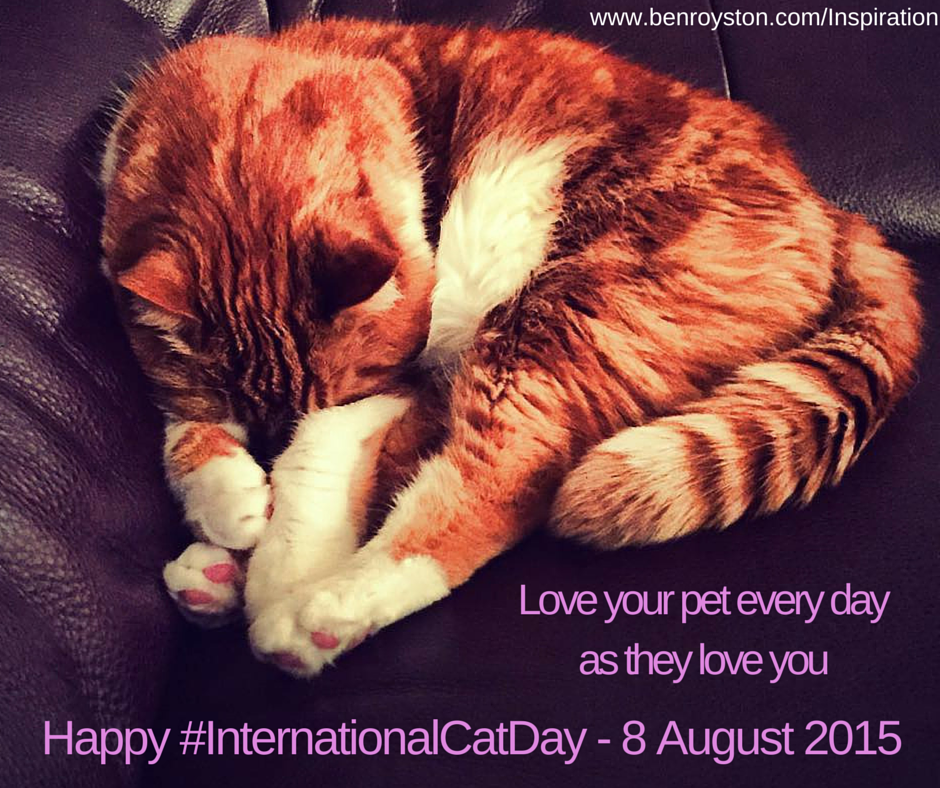 Happy InternationalCatDay (1)
